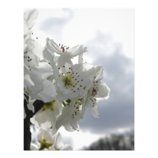 Blossoming pear tree against the cloudy sky letterhead