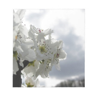 Blossoming pear tree against the cloudy sky notepad