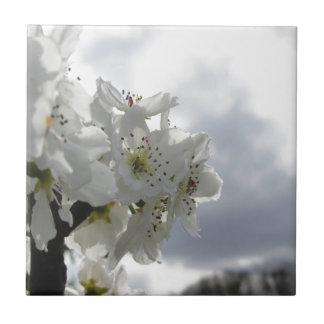 Blossoming pear tree against the cloudy sky tile