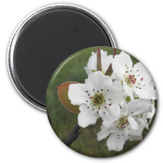 Blossoming pear tree against the green garden 2 inch round magnet