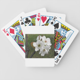 Blossoming pear tree against the green garden bicycle playing cards