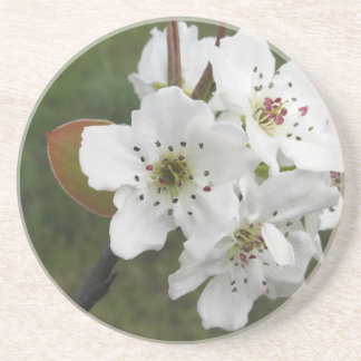 Blossoming pear tree against the green garden coaster