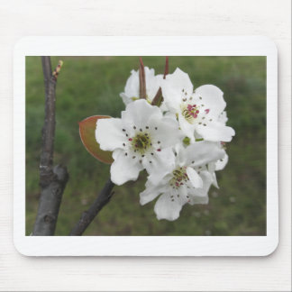 Blossoming pear tree against the green garden mouse pad
