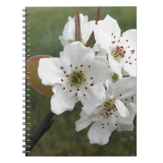 Blossoming pear tree against the green garden notebook