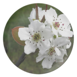 Blossoming pear tree against the green garden plate
