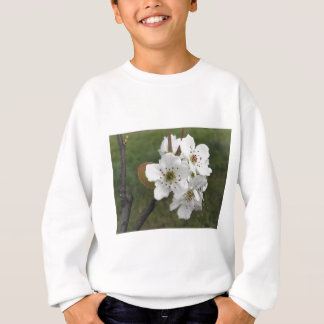 Blossoming pear tree against the green garden sweatshirt