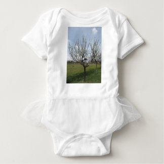 Blossoming pear tree in the garden  Tuscany, Italy Baby Bodysuit
