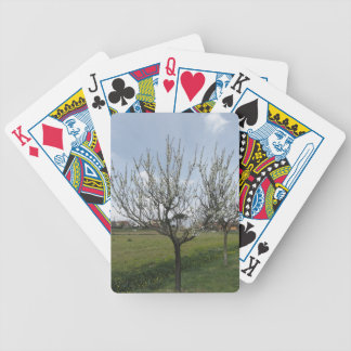 Blossoming pear tree in the garden  Tuscany, Italy Bicycle Playing Cards