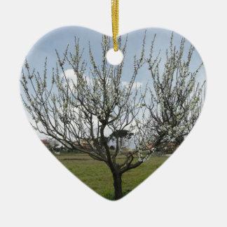 Blossoming pear tree in the garden  Tuscany, Italy Ceramic Heart Ornament