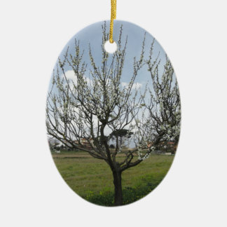 Blossoming pear tree in the garden  Tuscany, Italy Ceramic Ornament