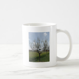 Blossoming pear tree in the garden  Tuscany, Italy Coffee Mug