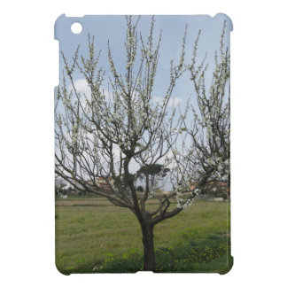 Blossoming pear tree in the garden  Tuscany, Italy Cover For The iPad Mini