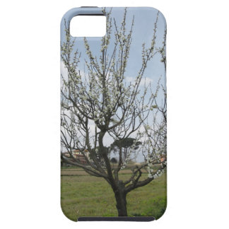 Blossoming pear tree in the garden  Tuscany, Italy iPhone 5 Cover