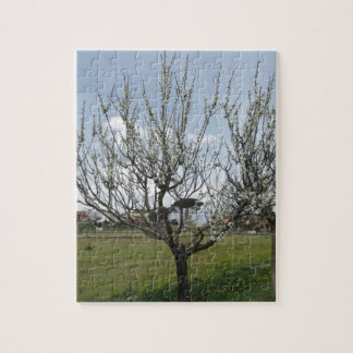 Blossoming pear tree in the garden  Tuscany, Italy Jigsaw Puzzle