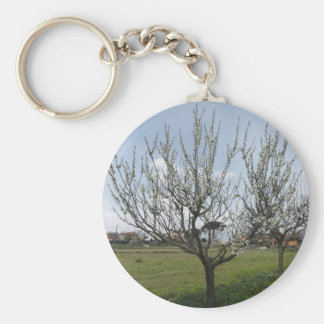 Blossoming pear tree in the garden  Tuscany, Italy Keychain