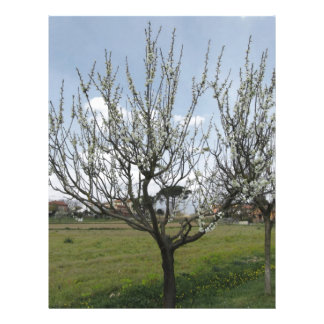 Blossoming pear tree in the garden  Tuscany, Italy Letterhead