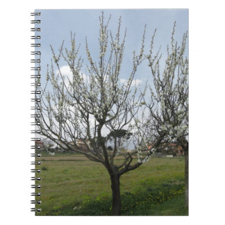 Blossoming pear tree in the garden  Tuscany, Italy Notebooks