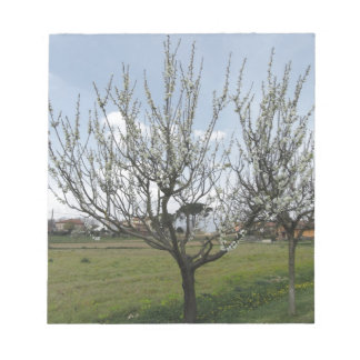 Blossoming pear tree in the garden  Tuscany, Italy Notepads