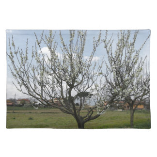 Blossoming pear tree in the garden  Tuscany, Italy Placemat