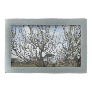 Blossoming pear tree in the garden  Tuscany, Italy Rectangular Belt Buckle