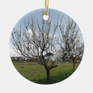 Blossoming pear tree in the garden  Tuscany, Italy Round Ceramic Ornament