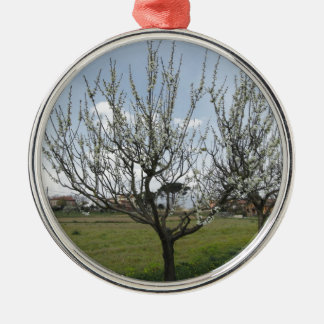 Blossoming pear tree in the garden  Tuscany, Italy Silver-Colored Round Ornament