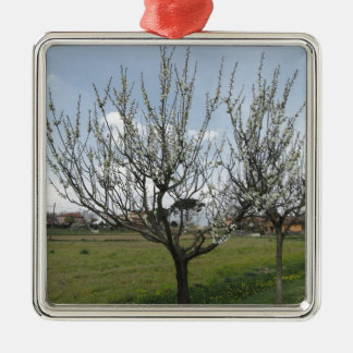 Blossoming pear tree in the garden  Tuscany, Italy Silver-Colored Square Ornament