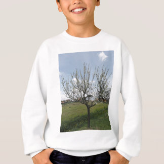 Blossoming pear tree in the garden  Tuscany, Italy Sweatshirt