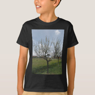 Blossoming pear tree in the garden  Tuscany, Italy T-Shirt