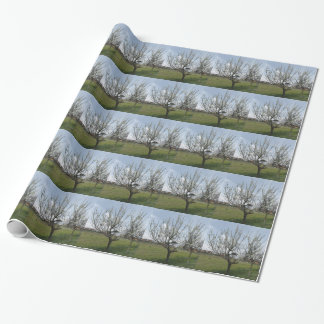 Blossoming pear tree in the garden  Tuscany, Italy Wrapping Paper