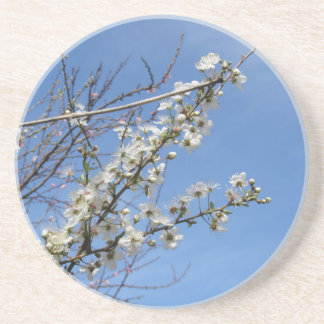 Blossoming plum against the sky . Tuscany, Italy Beverage Coaster