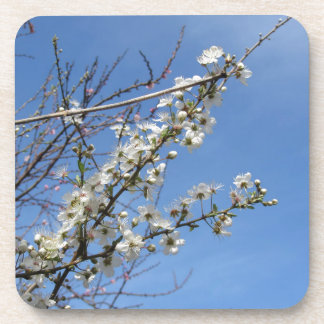 Blossoming plum against the sky . Tuscany, Italy Beverage Coasters