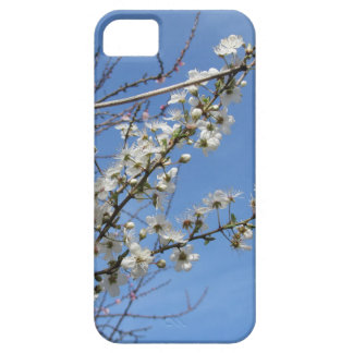 Blossoming plum against the sky . Tuscany, Italy iPhone 5 Covers