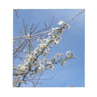 Blossoming plum against the sky . Tuscany, Italy Notepads