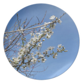 Blossoming plum against the sky . Tuscany, Italy Plate
