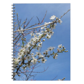 Blossoming plum against the sky . Tuscany, Italy Spiral Notebook