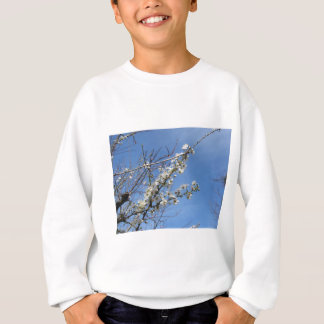 Blossoming plum against the sky . Tuscany, Italy Sweatshirt