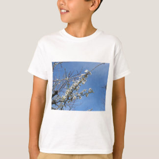 Blossoming plum against the sky . Tuscany, Italy T-Shirt