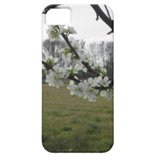 Blossoming plum . Flowering white tree in spring Case For The iPhone 5