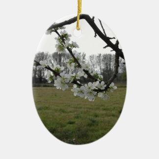 Blossoming plum . Flowering white tree in spring Ceramic Ornament