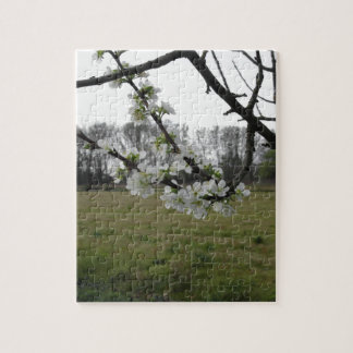 Blossoming plum . Flowering white tree in spring Jigsaw Puzzle