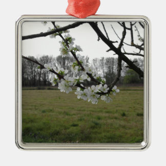 Blossoming plum . Flowering white tree in spring Metal Ornament