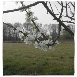 Blossoming plum . Flowering white tree in spring Napkin