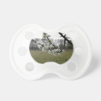 Blossoming plum . Flowering white tree in spring Pacifier