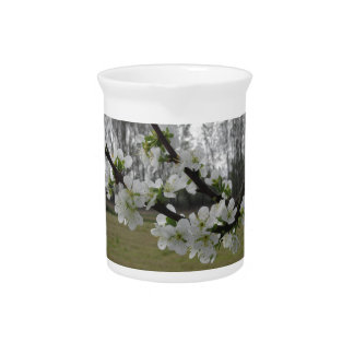 Blossoming plum . Flowering white tree in spring Pitcher