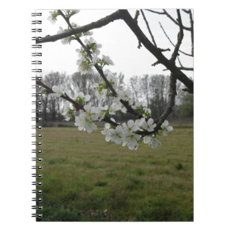 Blossoming plum . Flowering white tree in spring Spiral Notebook