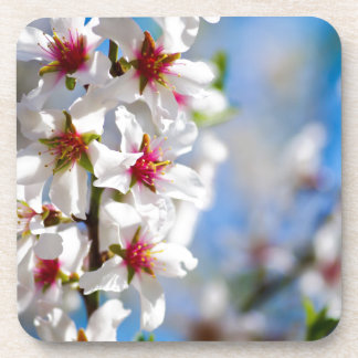 Blossoming tree branch with white flowers coaster