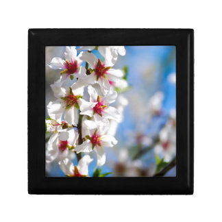 Blossoming tree branch with white flowers gift box