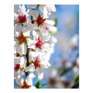 Blossoming tree branch with white flowers letterhead