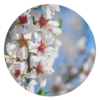 Blossoming tree branch with white flowers plate
